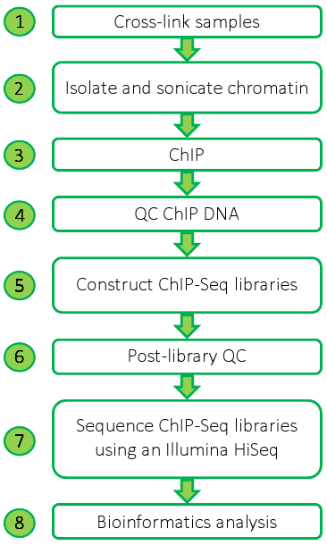 ChIP-Seq Workflow