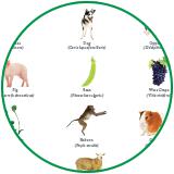 Epigenetics Services