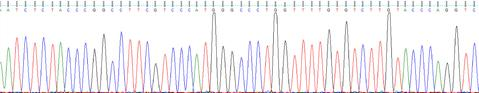 DNA sequencing chromatogram