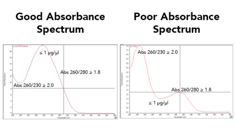 UV absorbance spectrum of DNA