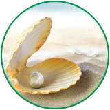 Clam containing a pearl