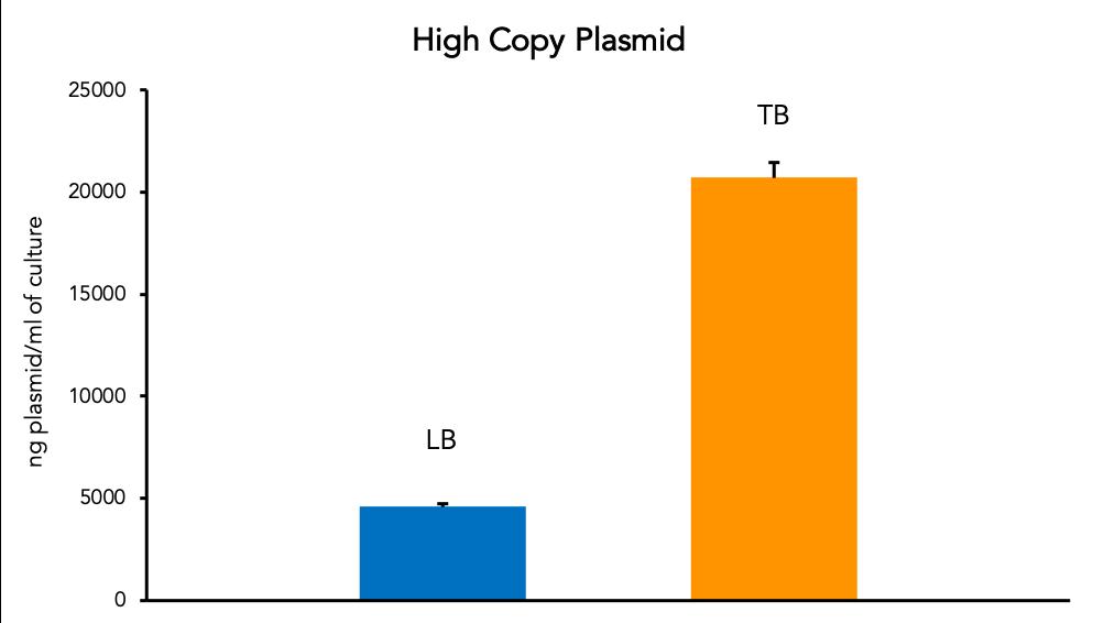 High Copy Plasmid
