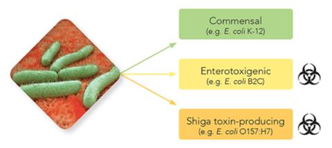 Shotgun metagenomics
