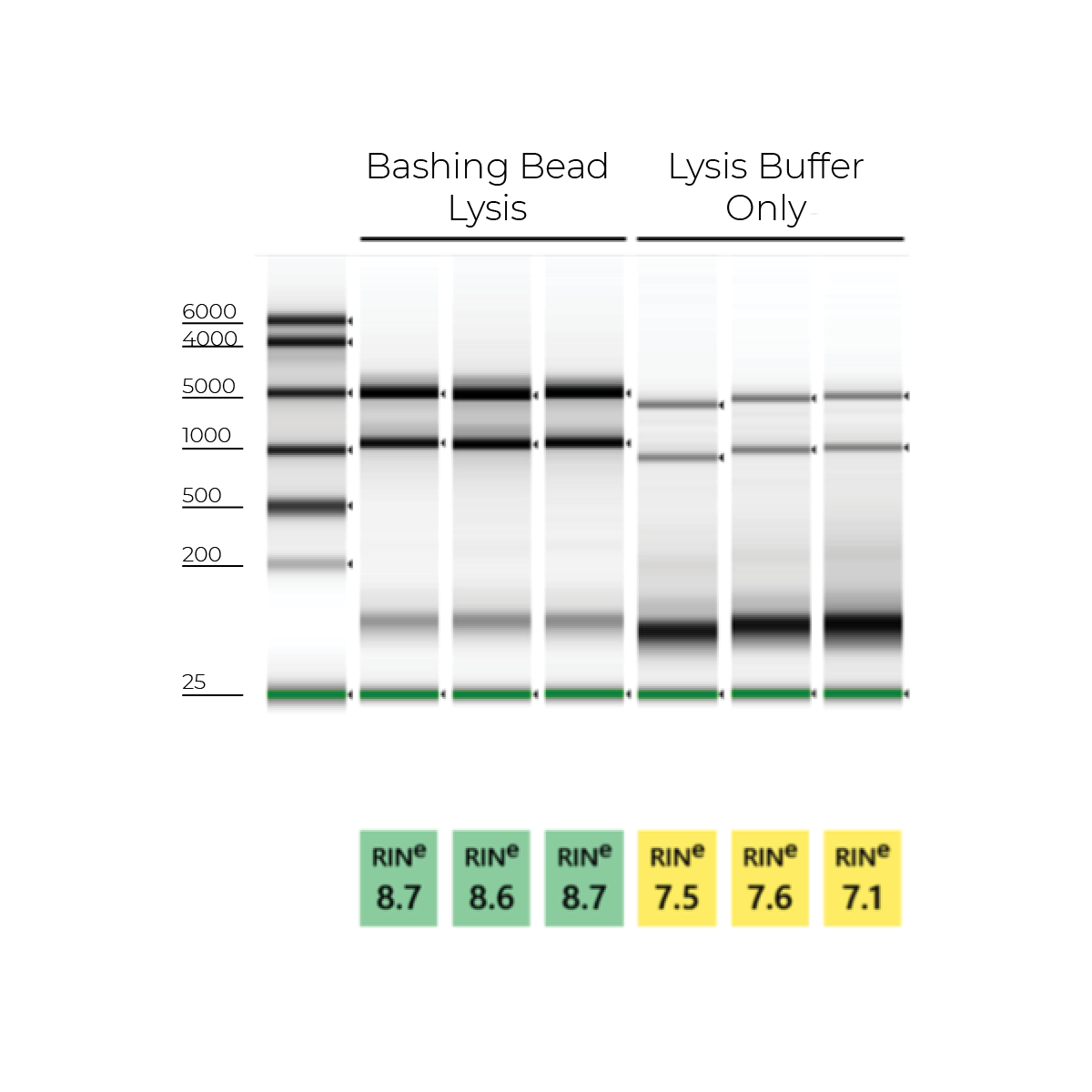 Top RNA Isolation Tips