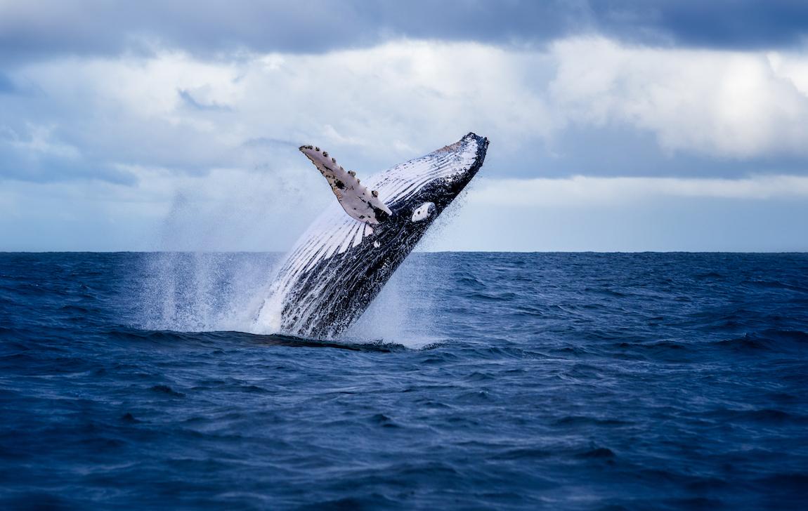 Whale splashing water in the ocean