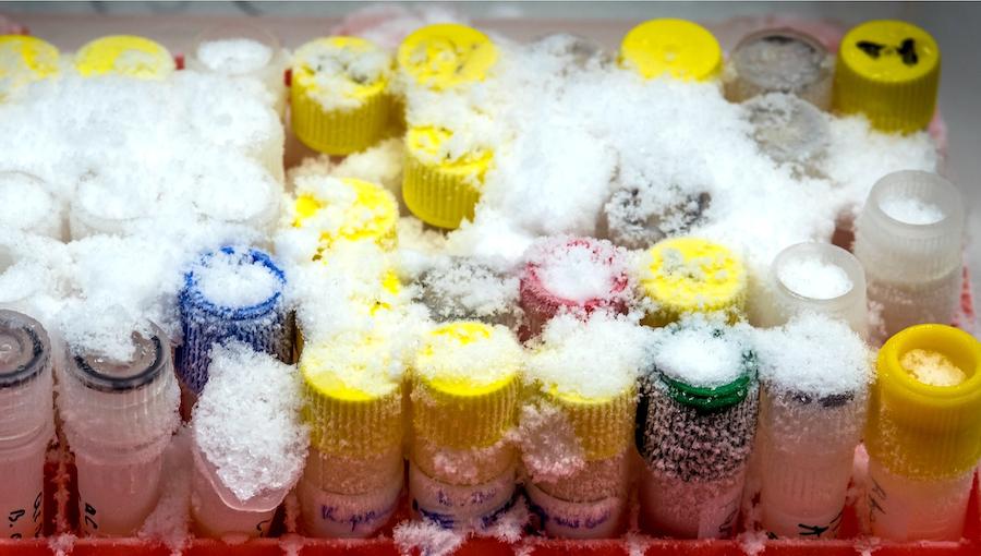 frozen test tubes