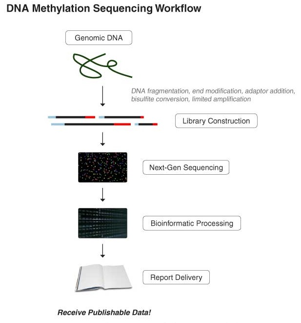DNA Methylation Workflow