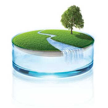 green initiative tree river in perti dish