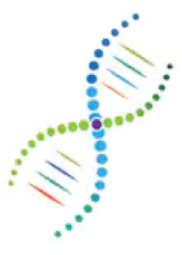 human dnage dna strand