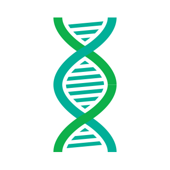 a portion of a DNA double helix in green