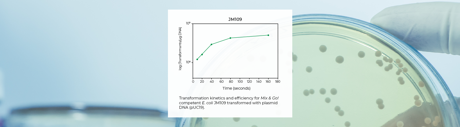 High Transformation Efficiency