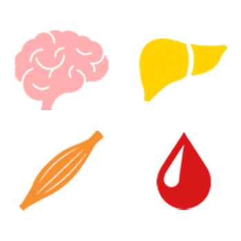 a simplified representation of a brain, a liver, a muscle, and a drop of blood