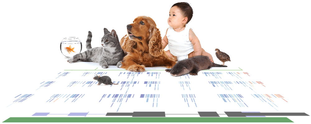 Image of baby, dog, cat and mice with a figure image