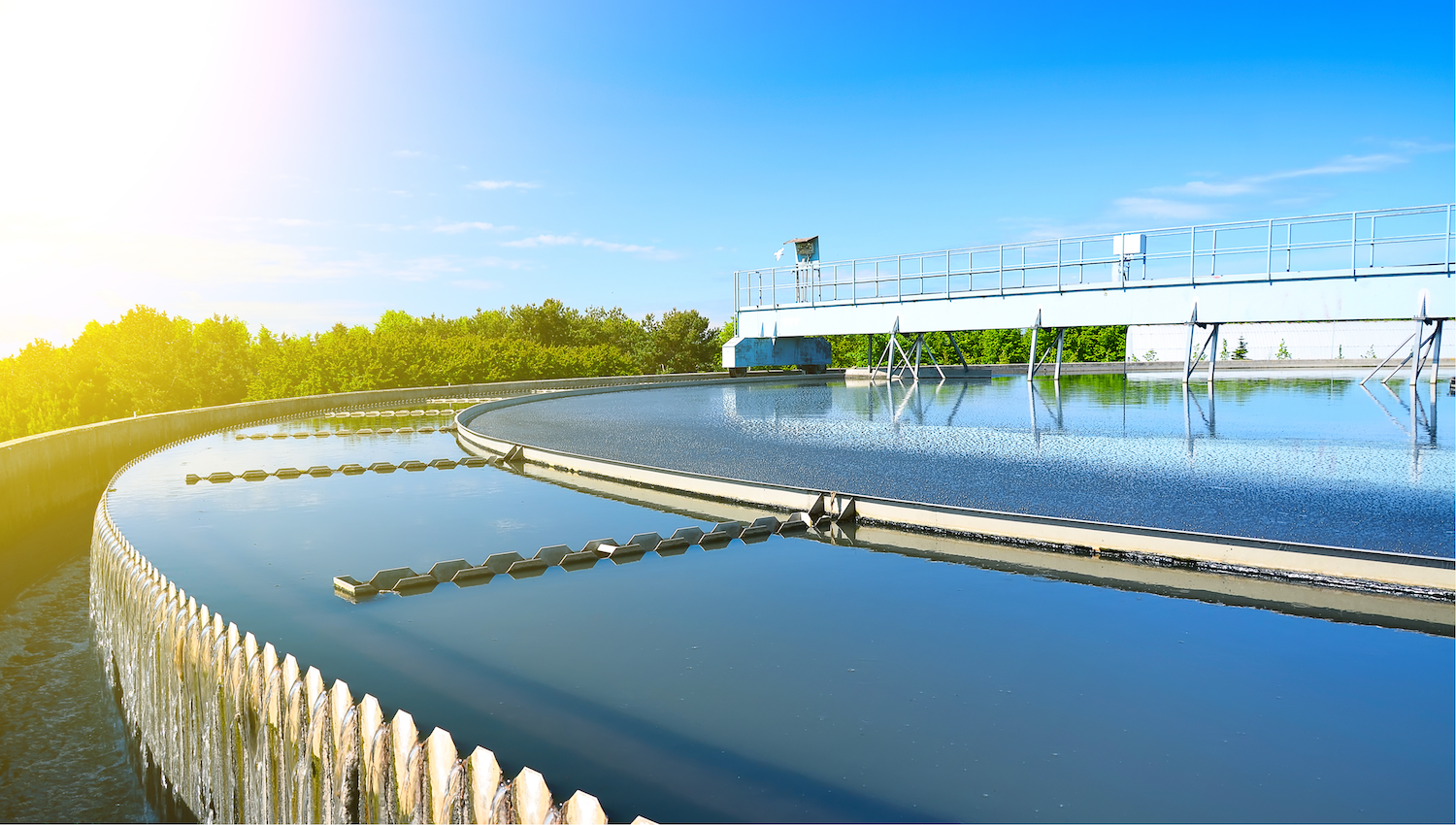 water plant