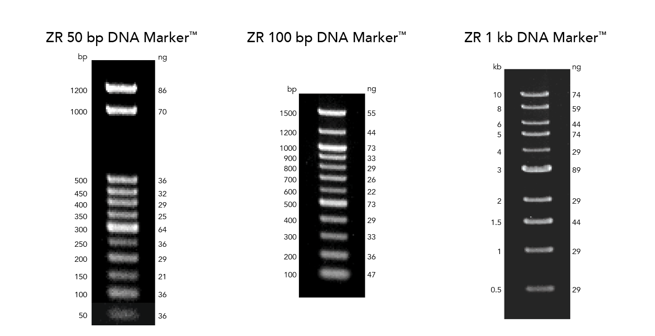DNA Molecular Weight Markers